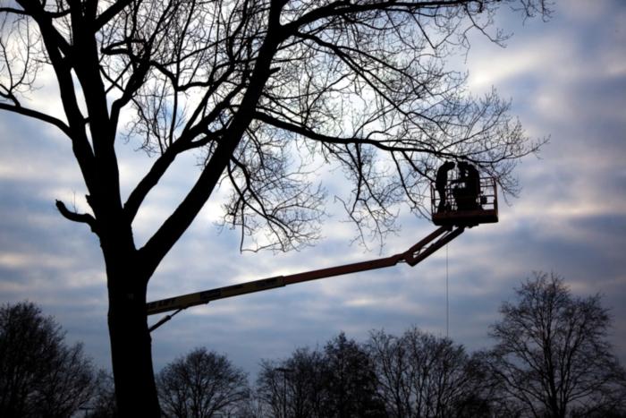 camera tree