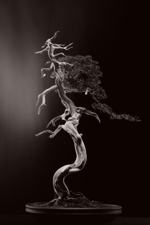 de zeer vermoeide man en de vrouw die hartstochtelijk van bonsai hield