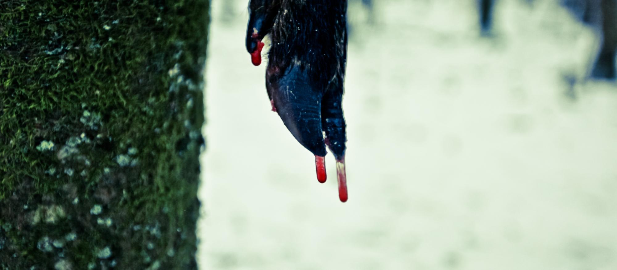 le sang du sanglier, la chasse